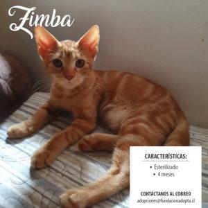Zimba