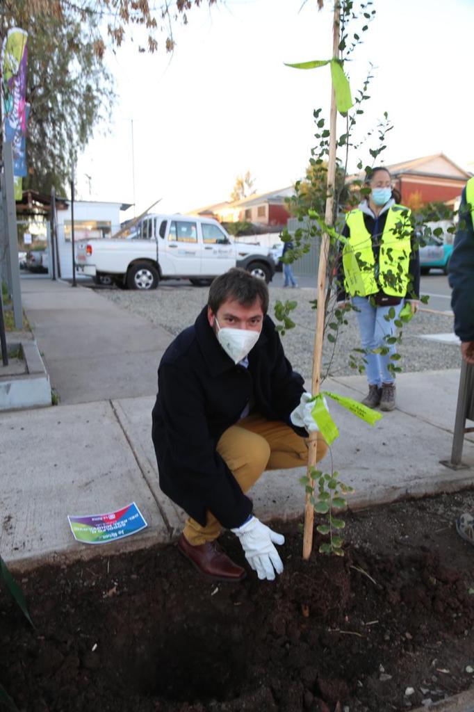 Plantación-árboles-10