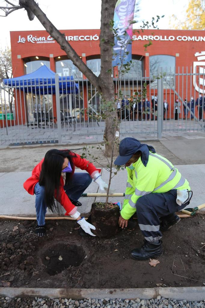 Plantación-árboles-2