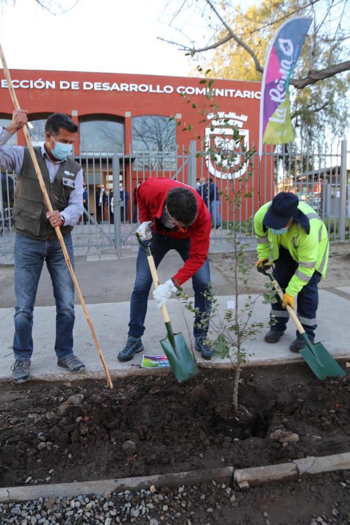 Plantación-árboles-3