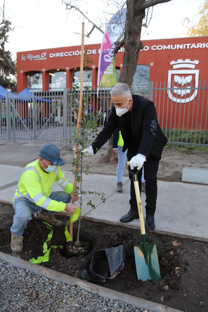 Plantación-árboles-4