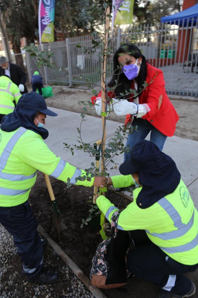 Plantación-árboles-6