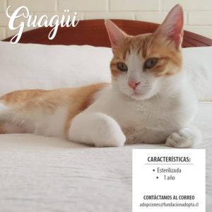 Guagui